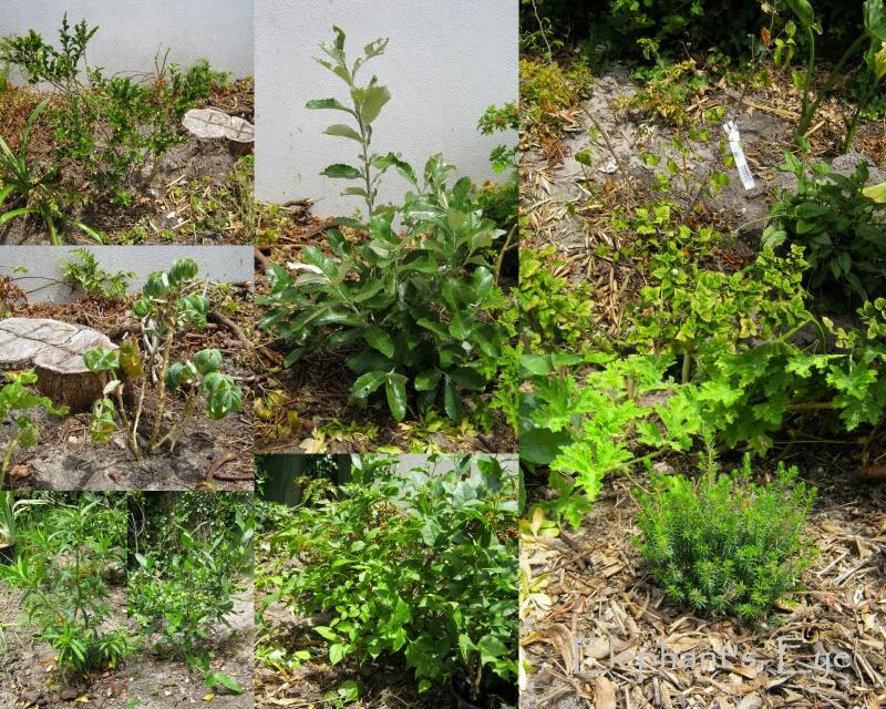 Diospyros, Brachylaena, Grewia Melianthus Leonotis, Burchellia, Halleria, Erica