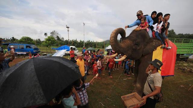 Scorpion minta Menteri LHK larang Atraksi Gajah Tunggang