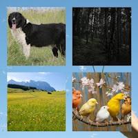 Ilustração capítulo cão pastor búlgaro, pássaros coloridos, floresta negra