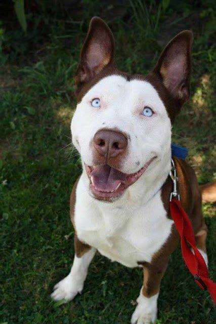 10 extrañas razas de perros creadas por los humanos