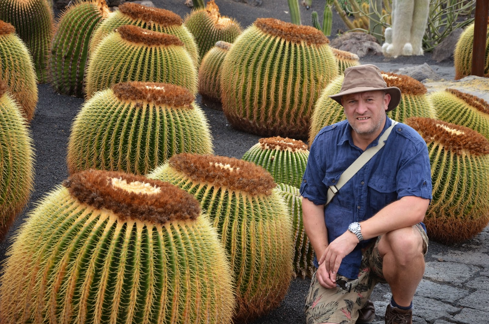 large ECHINOCACTUS GRUSONII specimens