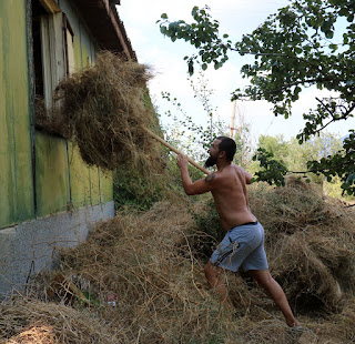 Throwing hay in through the window of the green building