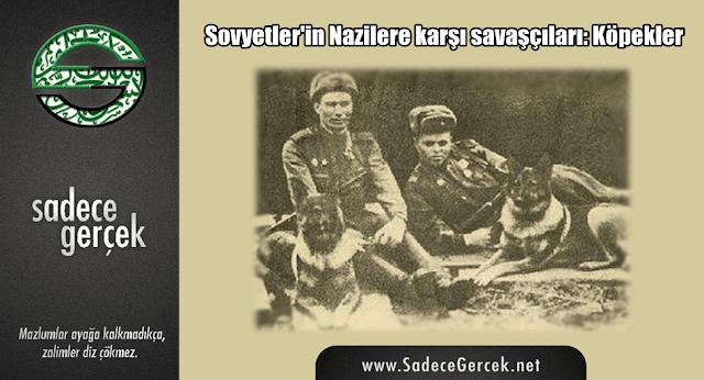 Sovyetler'in nazilere karşı savaşçıları; Köpekler