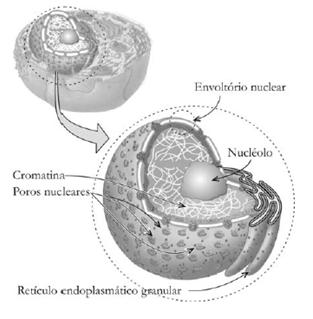 Imagem de um núcleo celular