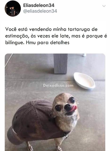 Tartaruga bilíngue