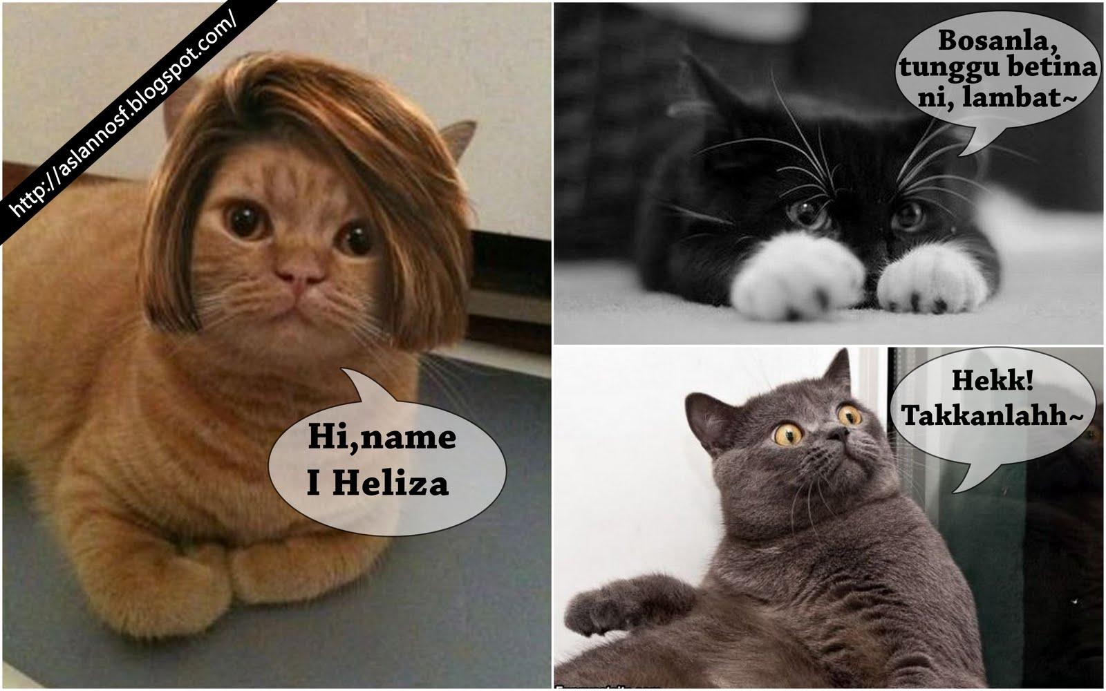 Kucing El Kelakar Kucing El
