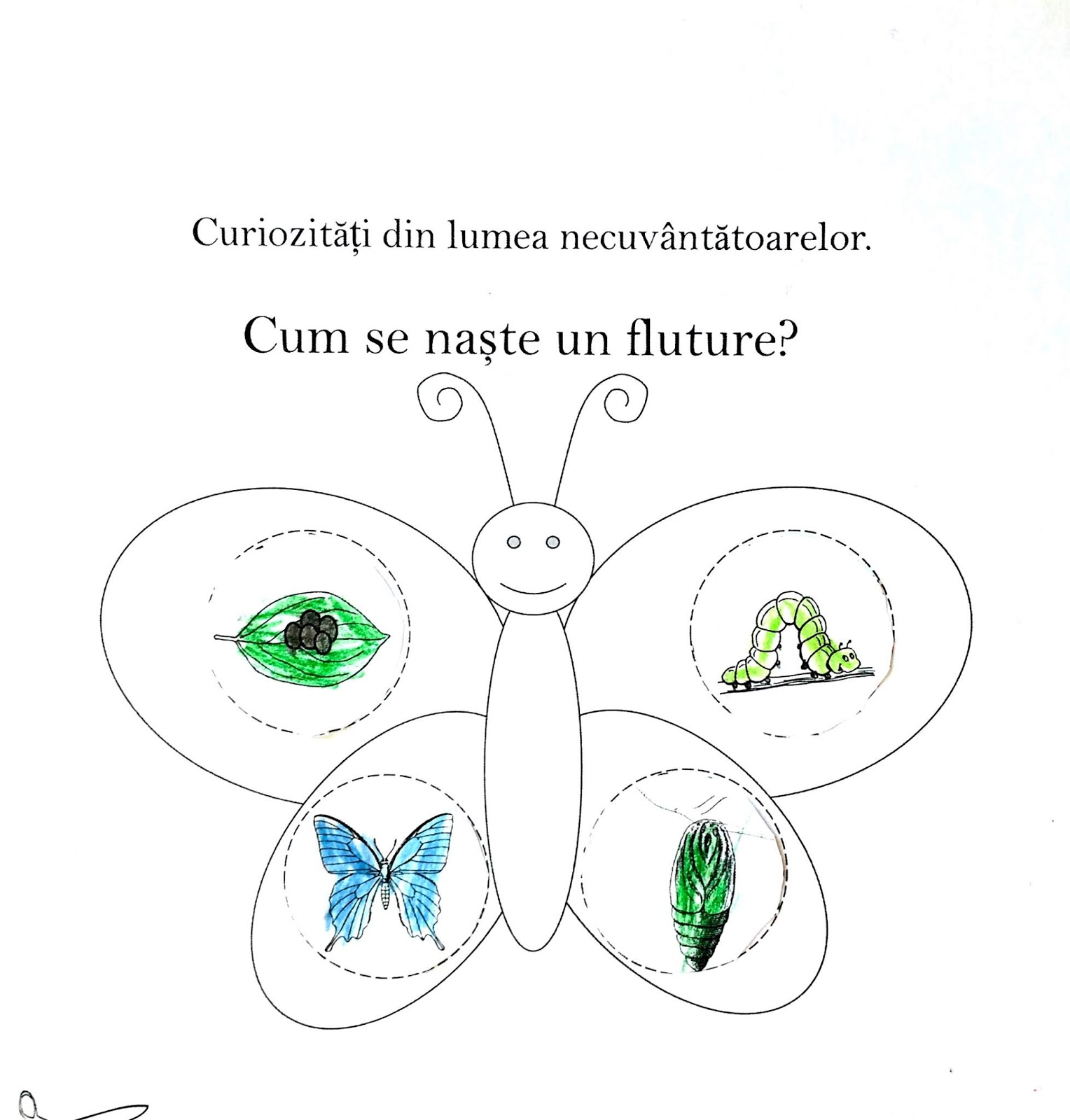 Cum ia ființă un fluture?