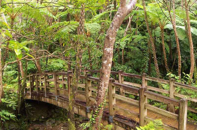 Wooden bridge, trail to waterfalls, jungle
