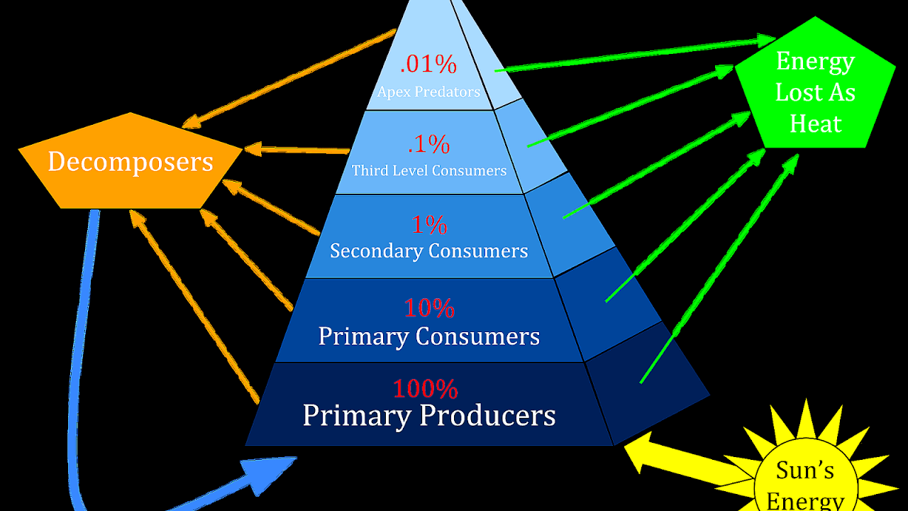 Rainforest Energy Pyramid - Energy Choices