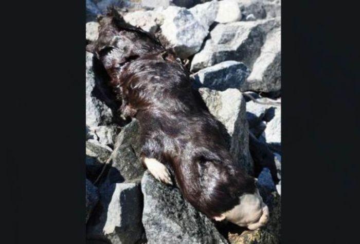 Strange Animal Found In Canada Pavan S Secrets Of