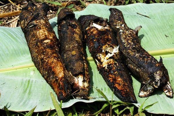 Đặc sản Đồng Tháp: Cá lóc nướng rơm