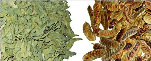 علاج البواسير موسوعة الاعشاب فهرس وصفات الطب البديل والتداوي بالاعشاب