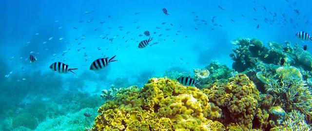 Fauna marina y Derecho del medio ambiente