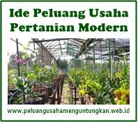 Peluang Usaha Pertanian Modern Yang Menjanjikan Keuntungan Peluang