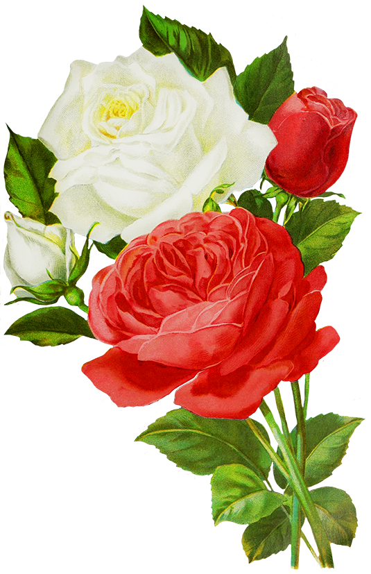Rose Png Effects Flower Png Effects Nik Creation Wallpapers