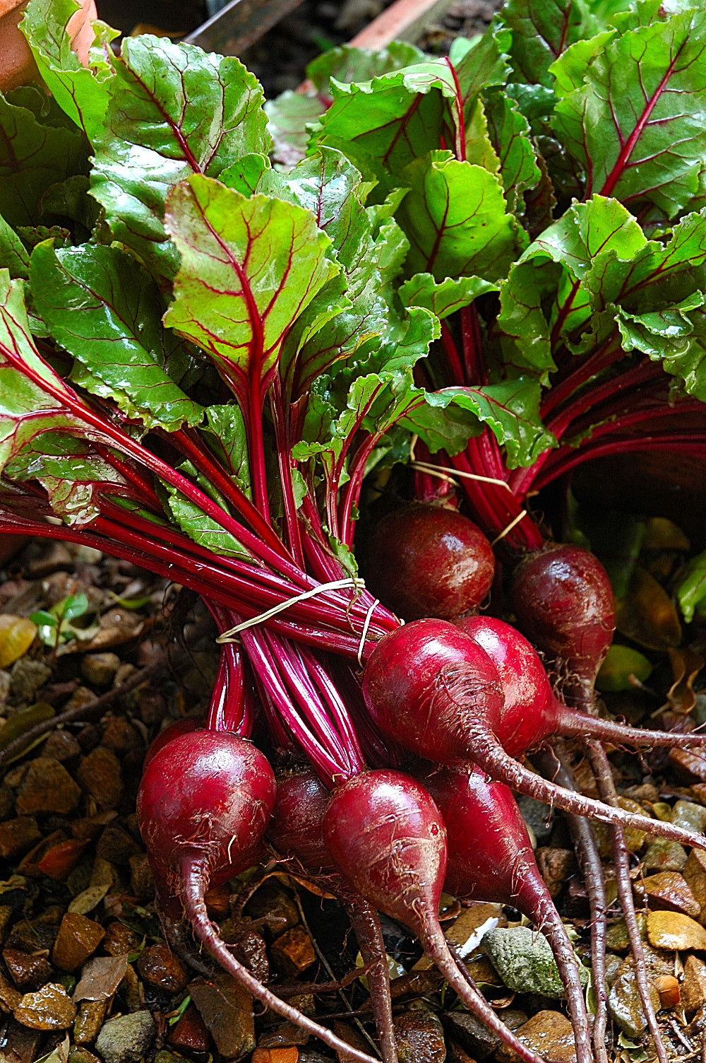 Health benefits of beetroot - CureZone