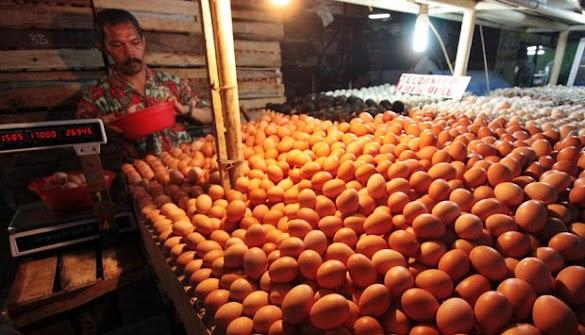 Harga Telur Ayam Sentuh Rekor Tertinggi Tahun Ini