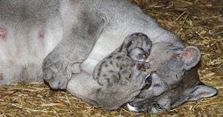 10 μοναδικές φωτογραφίες που αποδεικνύουν πως τα ζώα είναι γεμάτα αγάπη