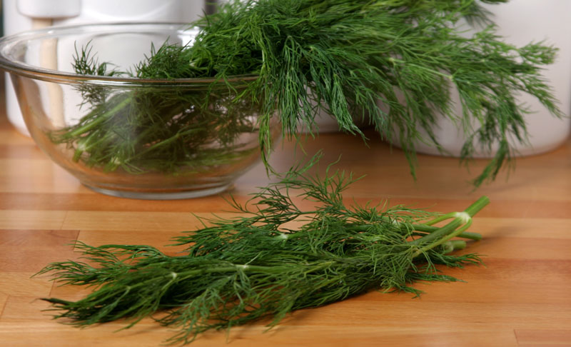 Dill herb for health