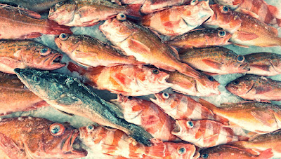 coastal rockfish, variety rockfish, bank perch, San Diego, open-air fish market