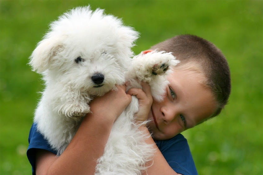 Families Best Dog Breeds Best Dog Breeds For Families