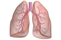 Заболевания органов дыхания схема лечения Арго