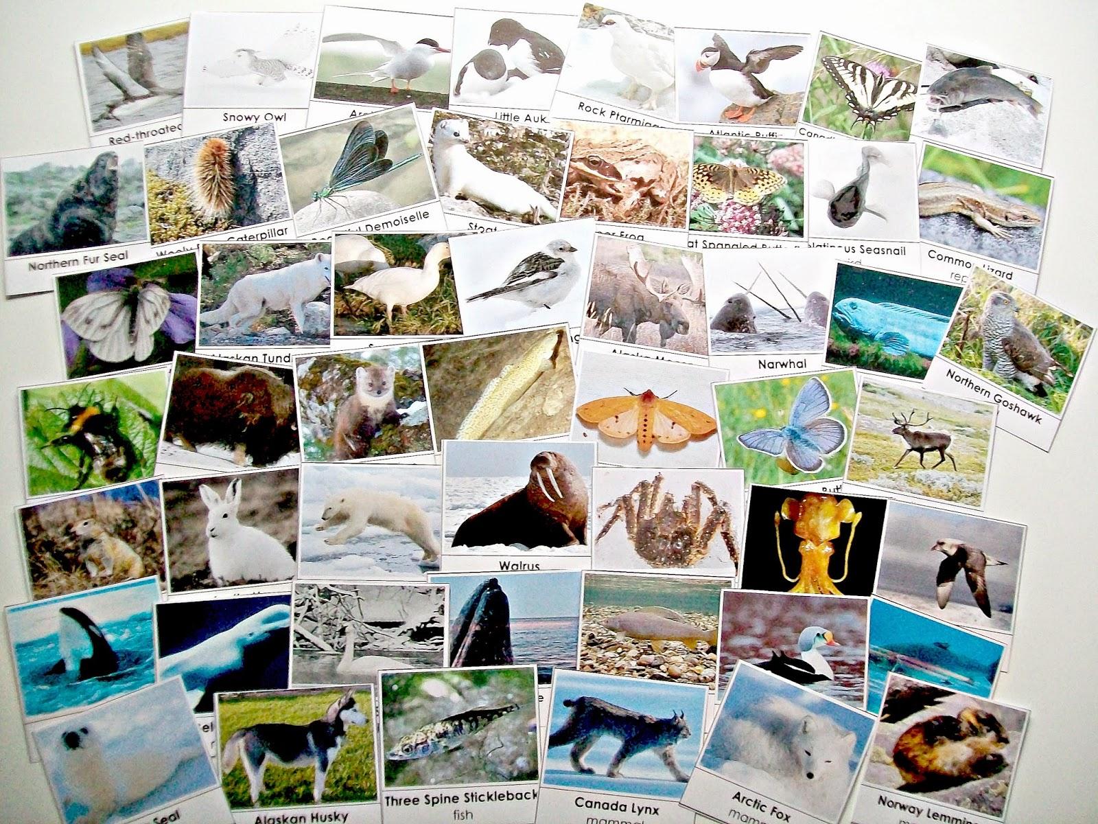 Arctic Unit W Free Printables