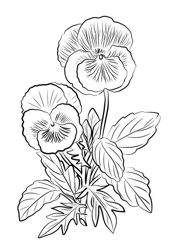 Tranh tô màu cây hoa
