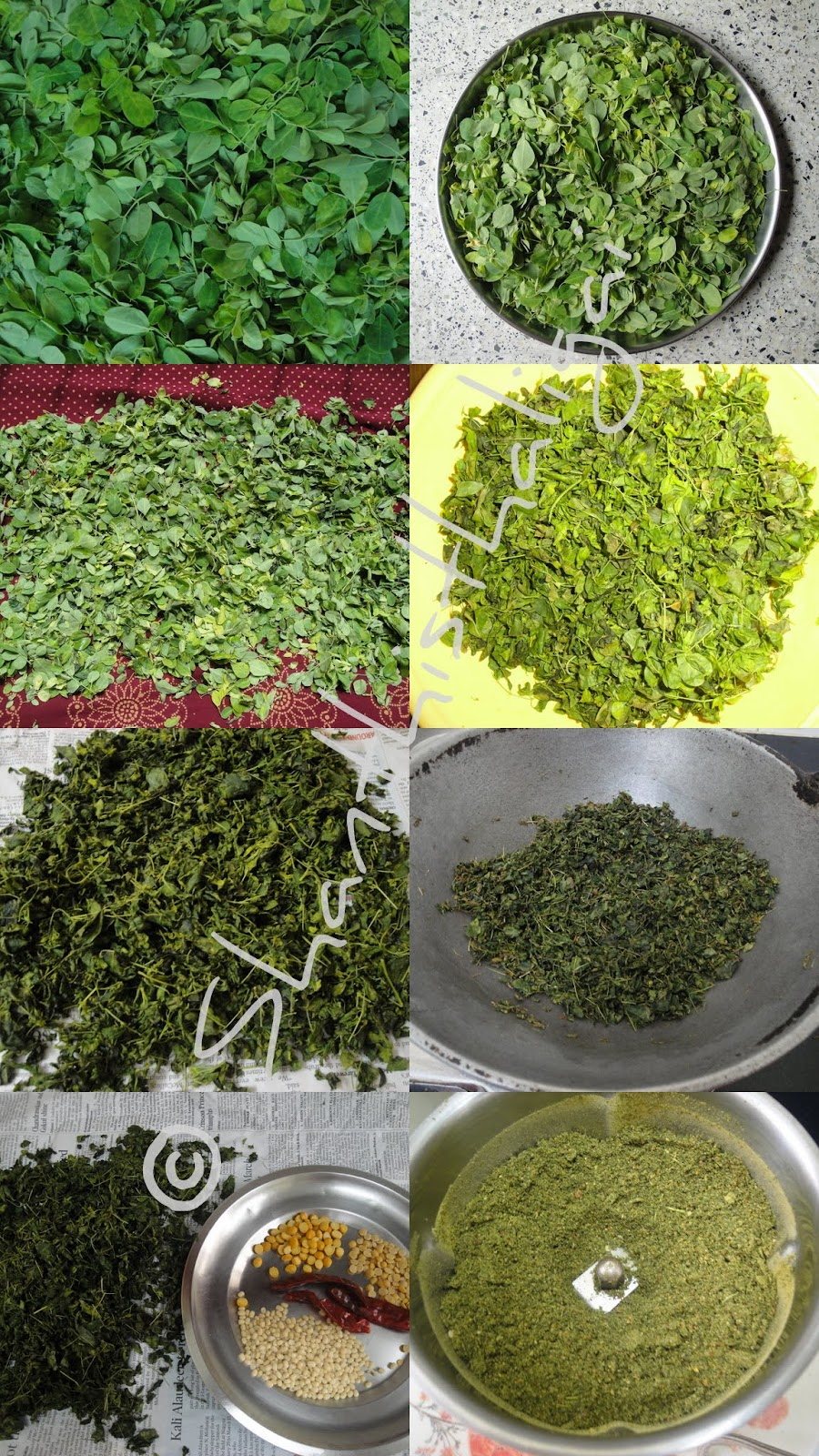 How to make drumstick leaves powder? How to clean murungai ilai easily? How to make murungai ilai podi?