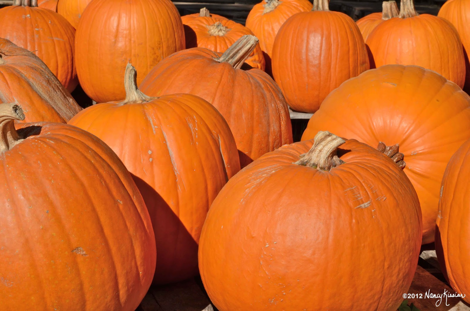 Wild About Texas: It's All About Pumpkins