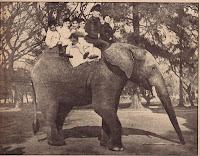elefanteDalia