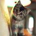 Những hình nền mèo con dễ thương nhất 2018 dành cho điện thoại