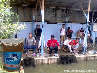 Umpan Serbuk Ikan Lele Galatama