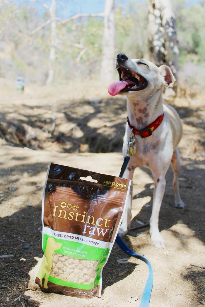 Image Result For Canned Dog Food