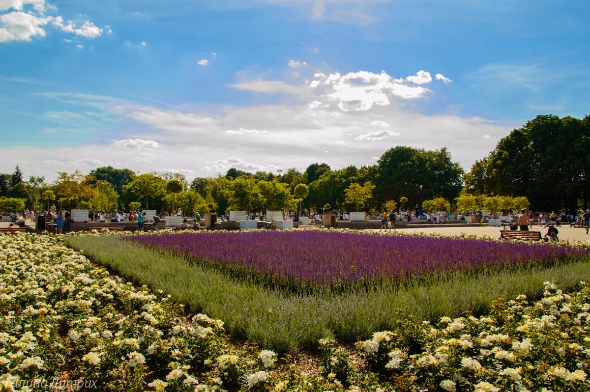 Парк Горького цветы фото