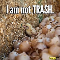 The Vegan Vine; I am not TRASH