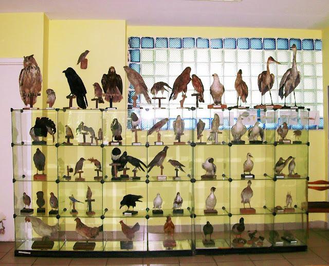 Самарский детский эколого-биологический центр: птицы Самарской области
