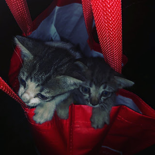 two kittens in a red shopping bag