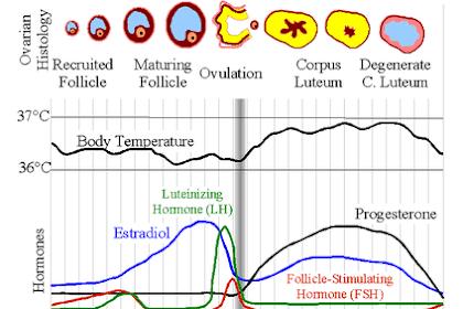 Bagaimana Cara Agar Menstruasi Cepat Selesai