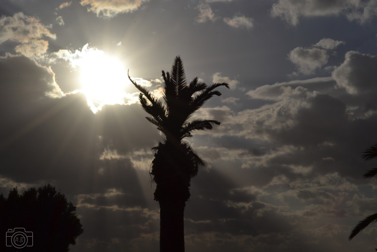 Cagliari, Sardegna, Sardaigne, palma, palmier, soleil