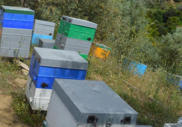 Πώς κατοχυρώνουμε ένα Μελισσοκομείο