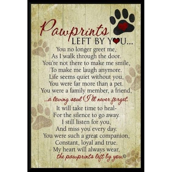 Pawprints left by you...  You no longer greet me, As I walk through the door. You're not there to make me smile, To make me laugh anymore. Life seems quiet without you, You were far more than a pet. You were a family member, a friend, ... a loving soul I'll never forget.  It will take time to heal - For the silence to go away. I still listen for you, And miss you every day. You were such a great companion, Constant, loyal and true. My heart will always wear, the pawprints left by you.