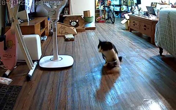 Ο γάτος που θα δείτε στο βίντεο είναι παράλυτος στα δύο πίσω πόδια του και  σώθηκε από τον θάνατο μετά από χτύπημα αυτοκινήτου 02ba411f76a