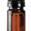 Get To Know The Oils: Arborvitae