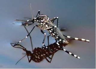 Zanzara si muove in acqua