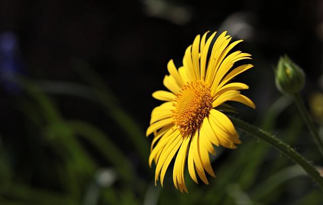hoa dep nhat dong tien