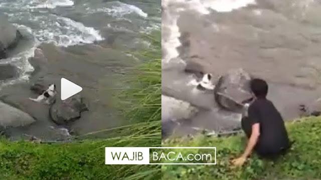 Video Seorang Pria Berseragam Hitam Hanyutkan Anjing di Sungai Ayung Bali