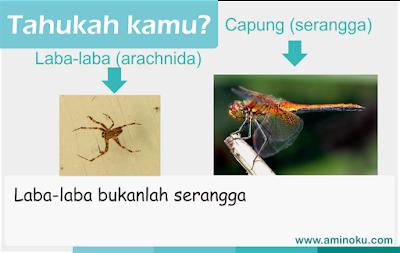 Laba laba bukanlah serangga
