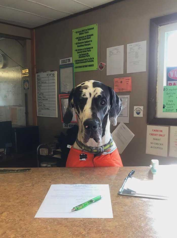 25 Adorable Dogs With Real Jobs