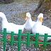 【愛南町特集】一本松温泉あけぼの荘 愛媛県でのGoogleストリートビュー導入・撮影・問い合わせ・依頼・申し込みはVR Lab(ブイアールラボ)